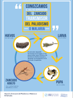 Afiches_Malaria_Paludismo6p